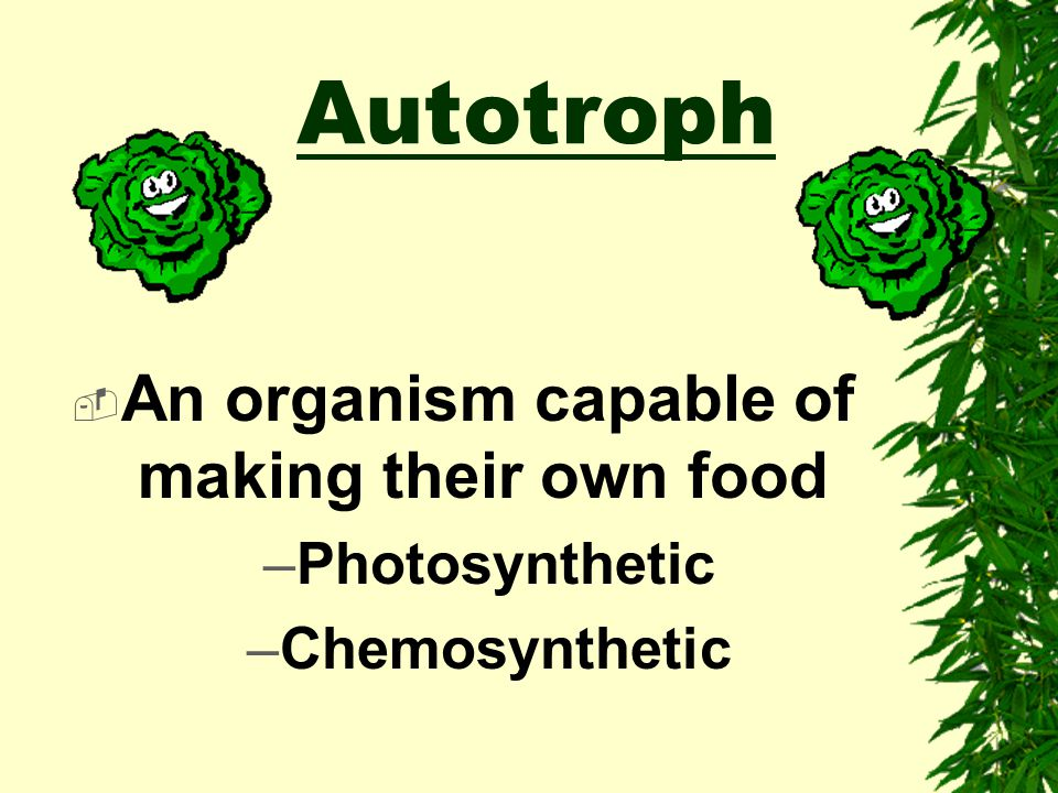An organism capable of making their own food