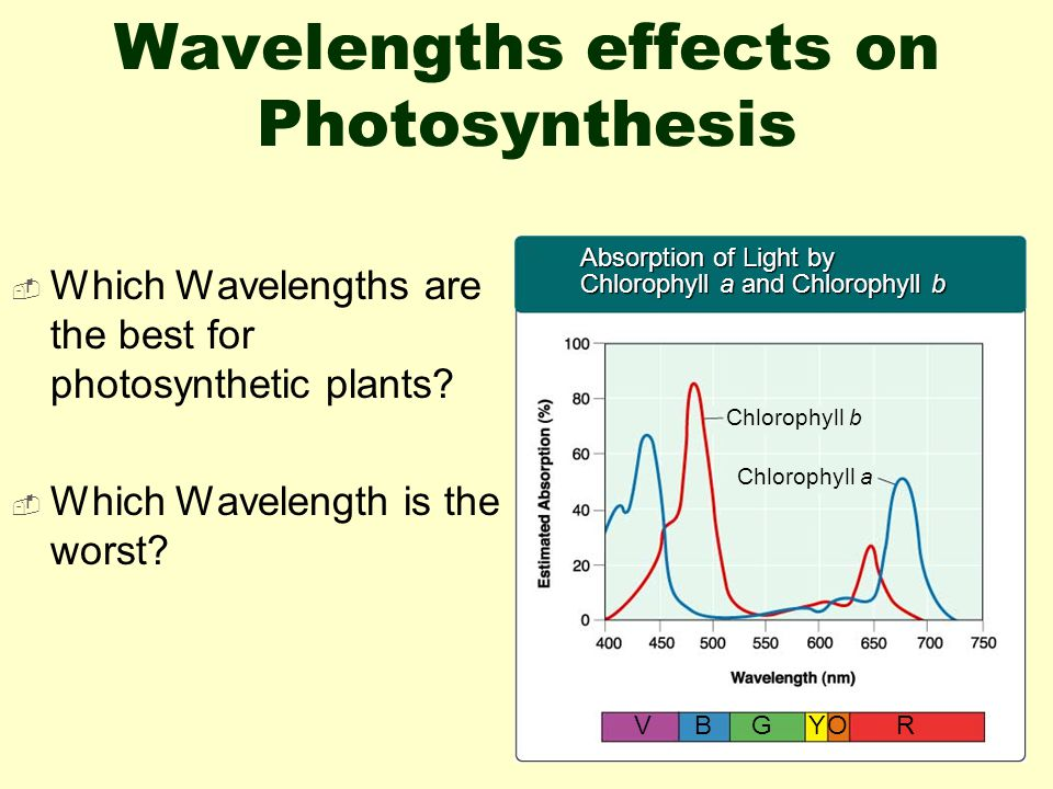 Wavelengths effects on Photosynthesis