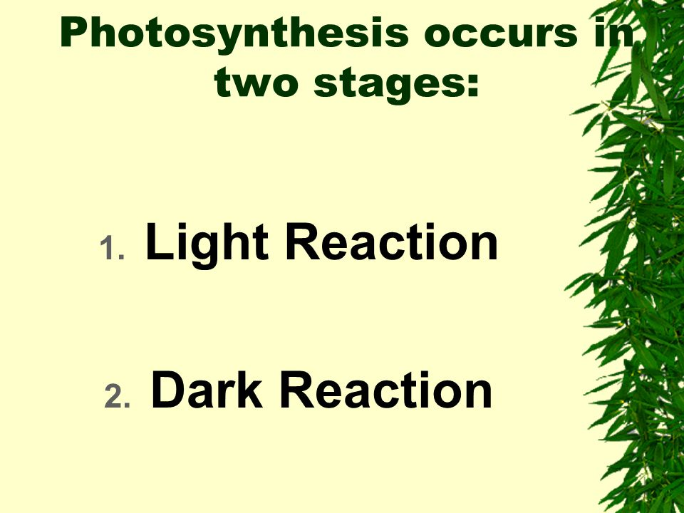 Photosynthesis occurs in two stages: