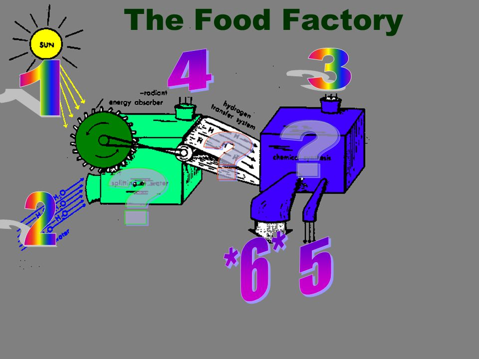 The Food Factory 4 3 1 2 *6* 5