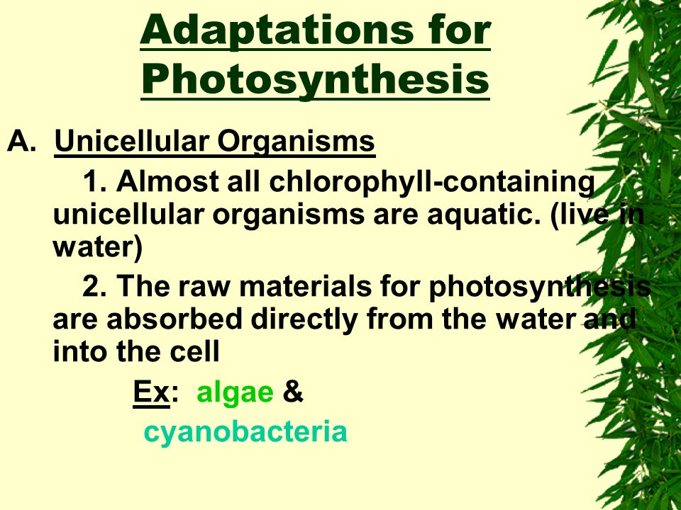 Adaptations for Photosynthesis