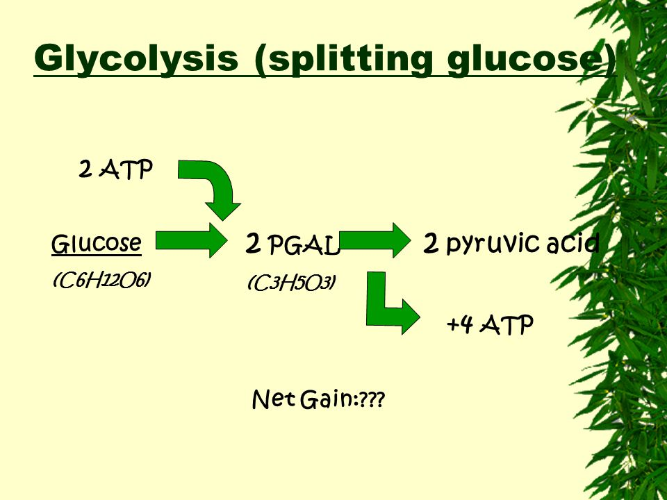 Glycolysis (splitting glucose)