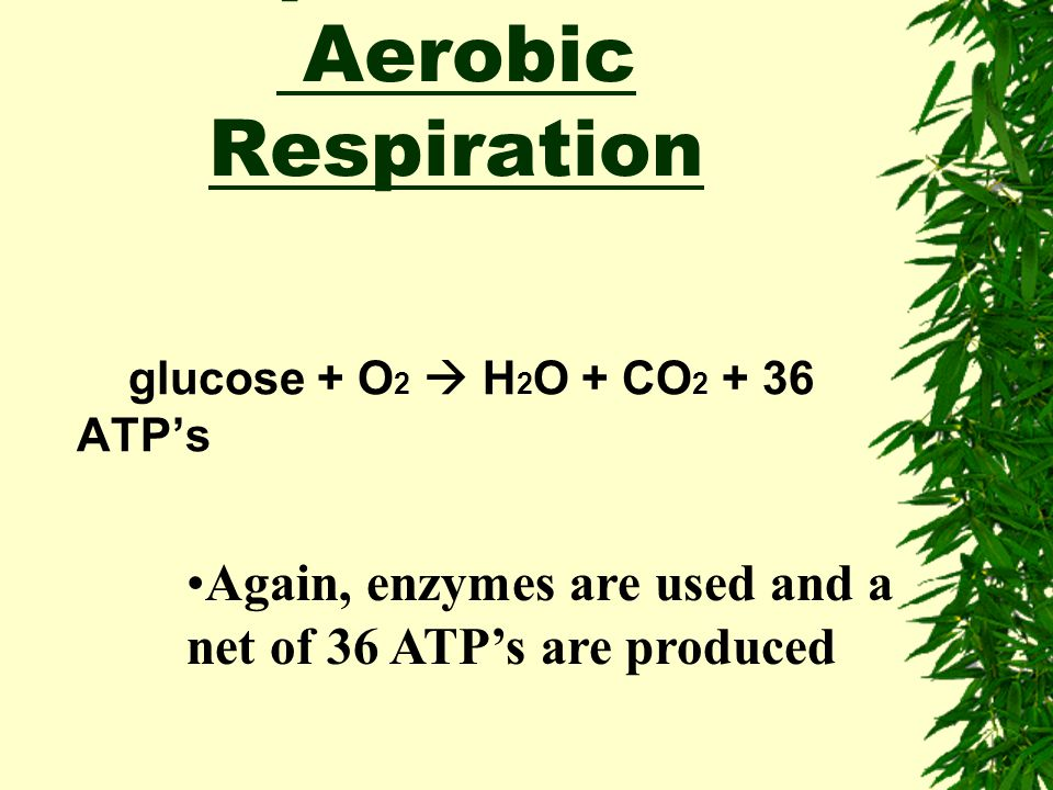 Equation for Aerobic Respiration
