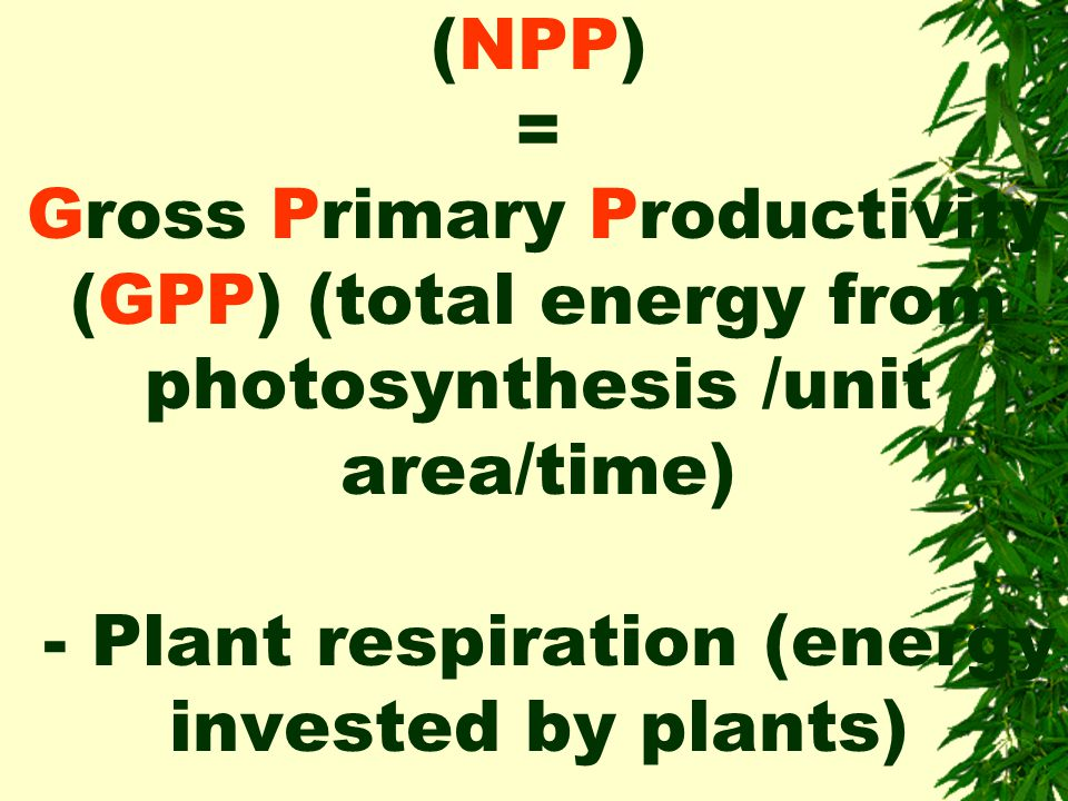 Net Primary Productivity (NPP) = Gross Primary Productivity (GPP) (total energy from photosynthesis /unit area/time) - Plant respiration (energy invested by plants)