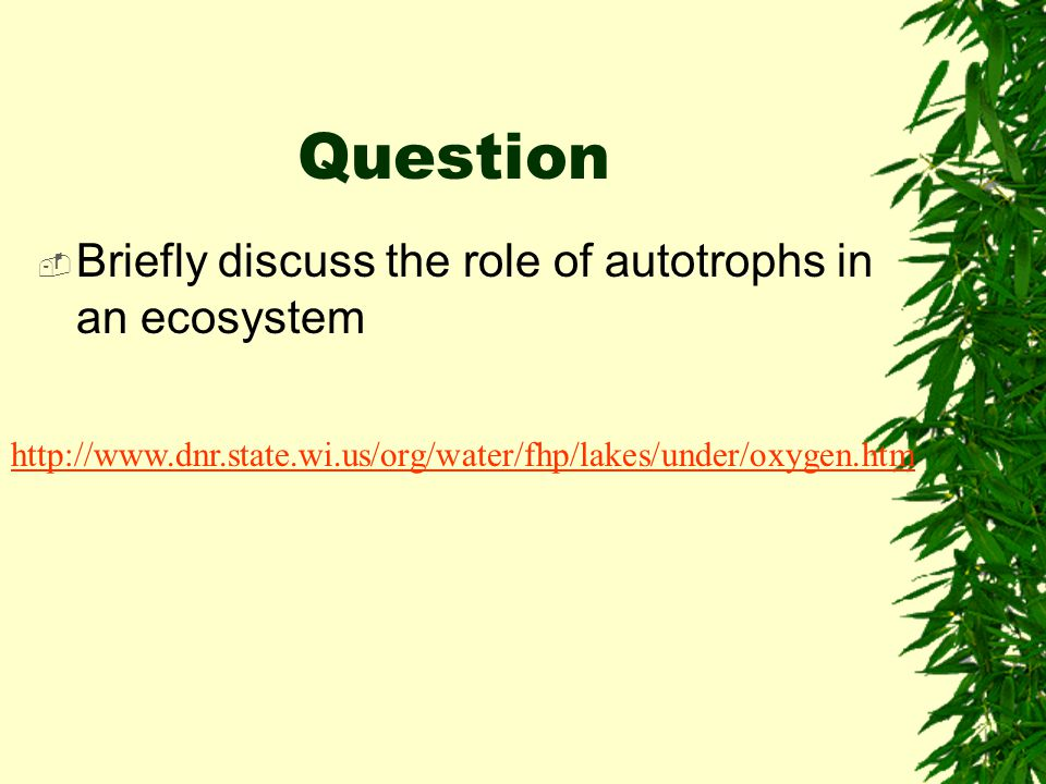 Question Briefly discuss the role of autotrophs in an ecosystem