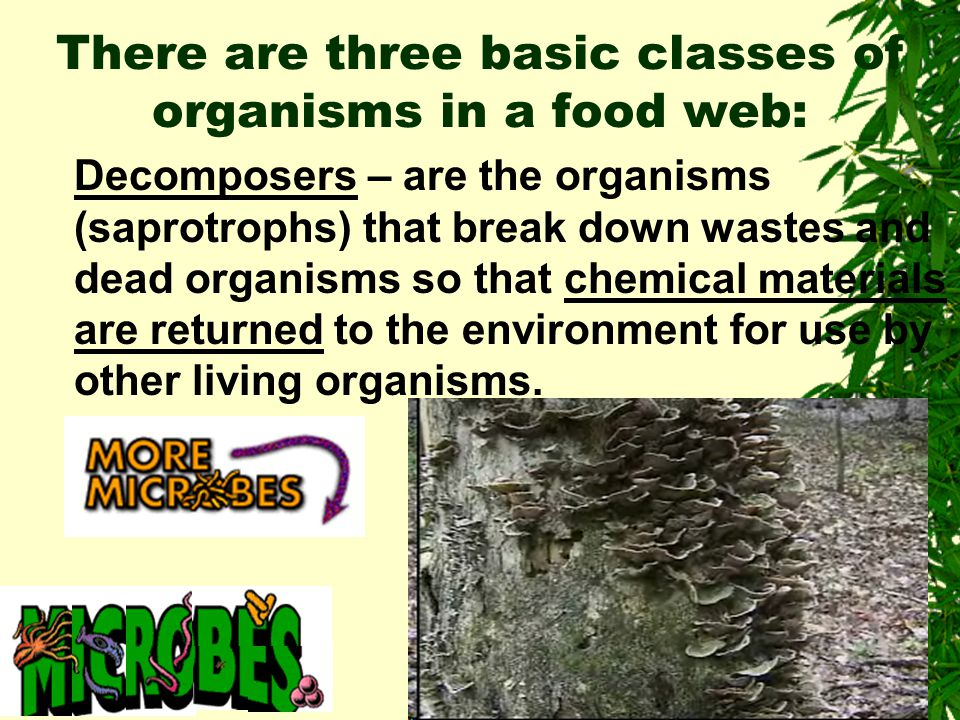 There are three basic classes of organisms in a food web: