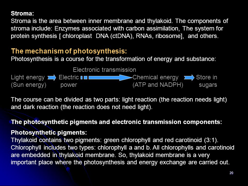 The mechanism of photosynthesis: