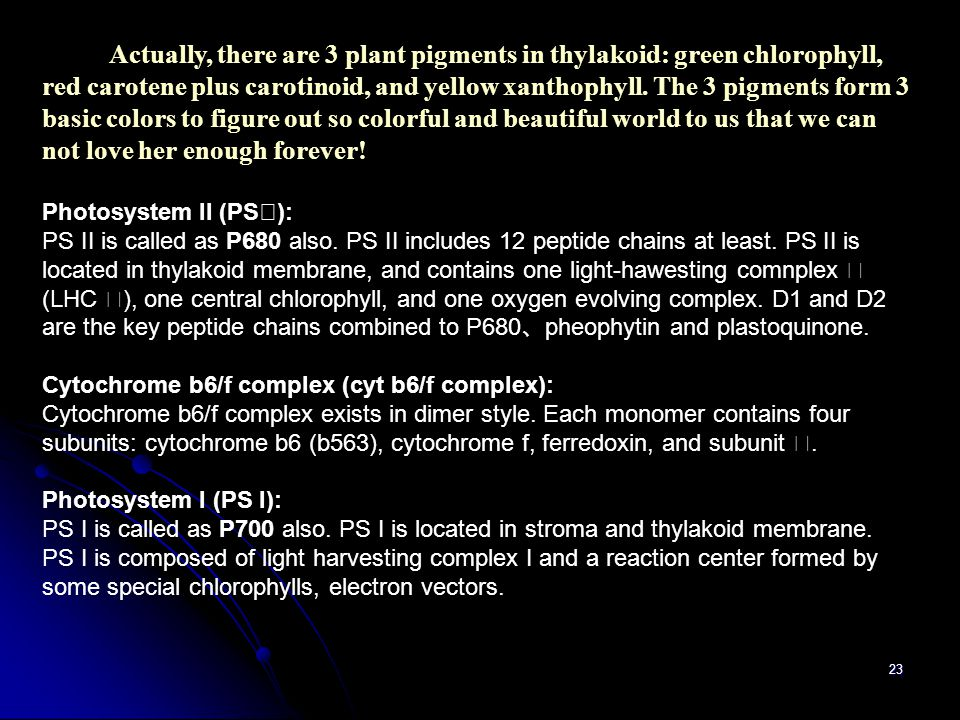Actually, there are 3 plant pigments in thylakoid: green chlorophyll, red carotene plus carotinoid, and yellow xanthophyll. The 3 pigments form 3 basic colors to figure out so colorful and beautiful world to us that we can not love her enough forever!