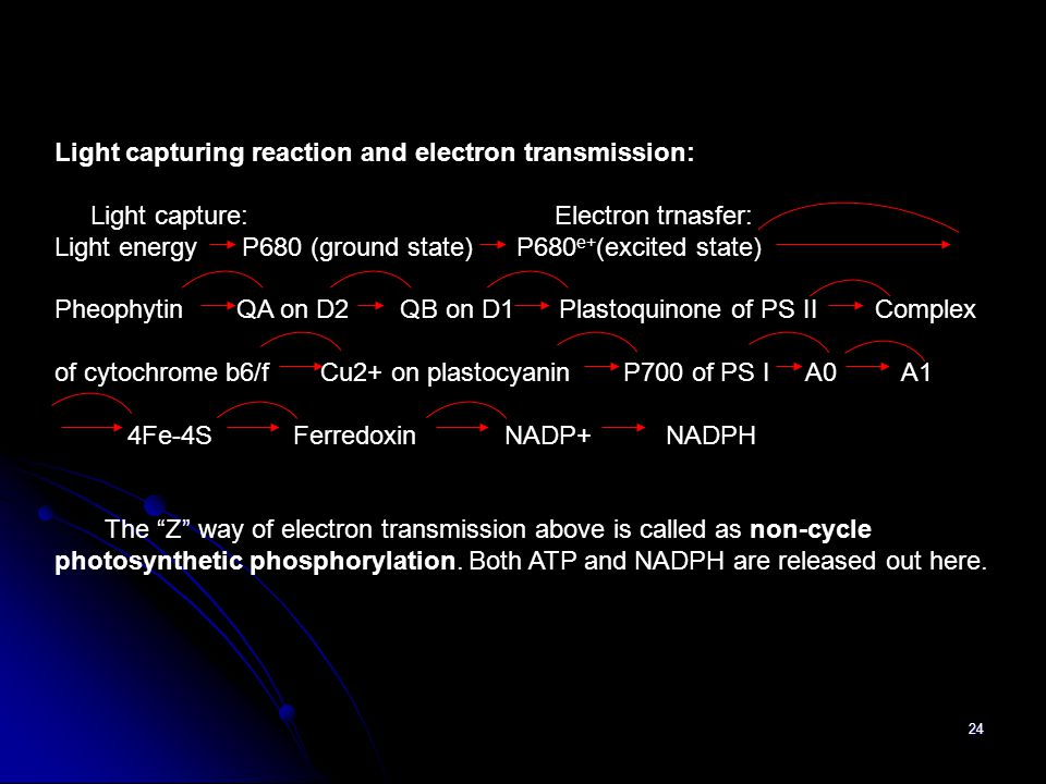 Light capturing reaction and electron transmission: