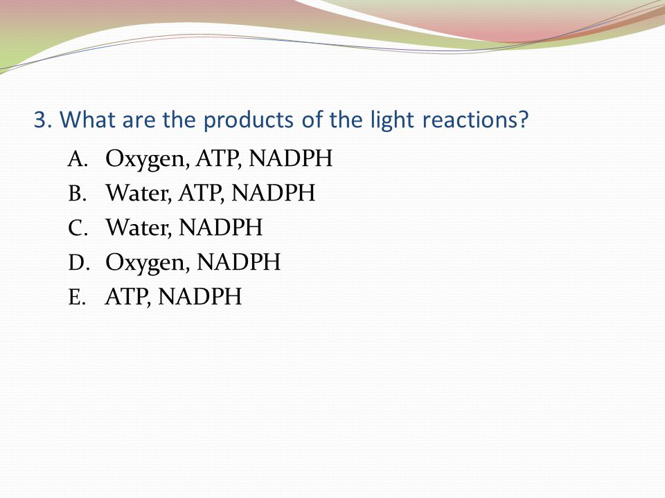 3. What are the products of the light reactions