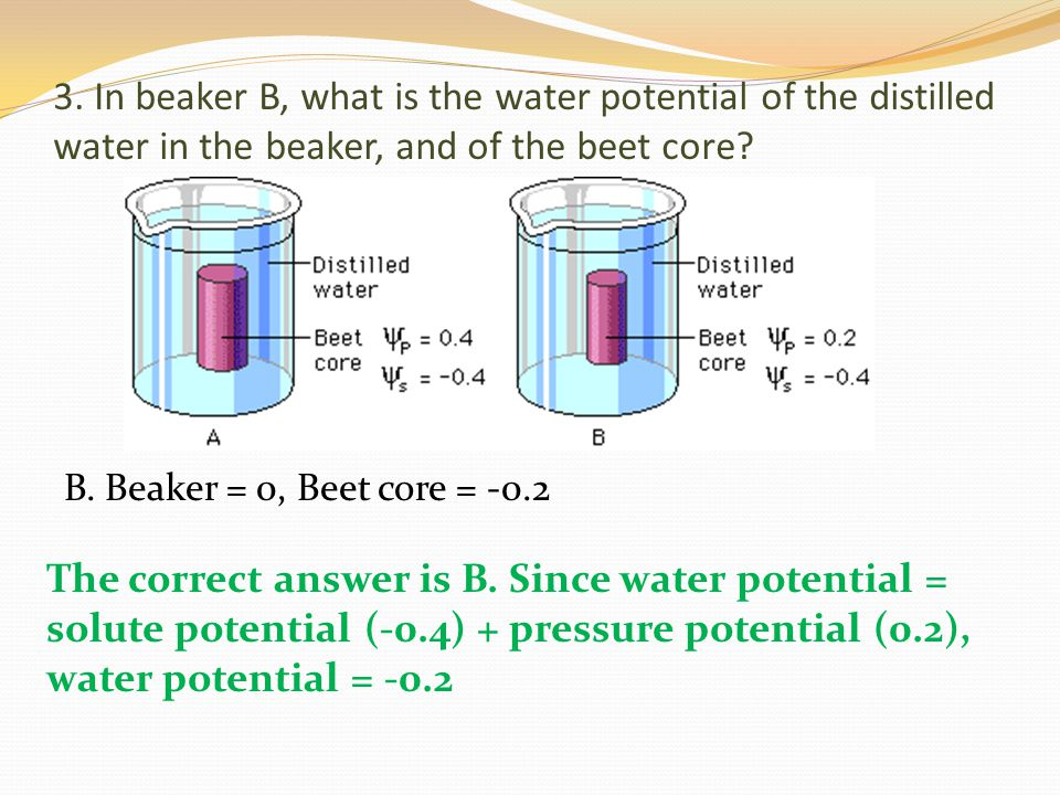 3. In beaker B, what is the water potential of the distilled water in the beaker, and of the beet core