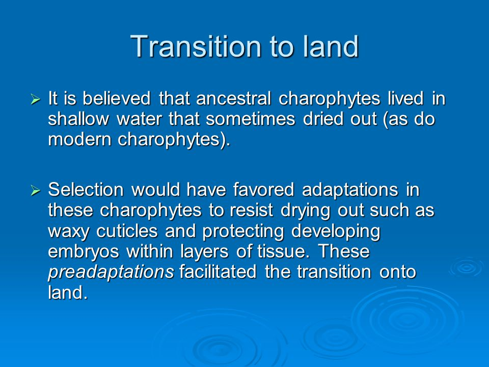 Transition to land It is believed that ancestral charophytes lived in shallow water that sometimes dried out (as do modern charophytes).