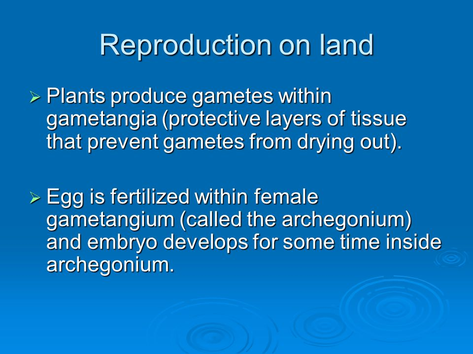 Reproduction on land Plants produce gametes within gametangia (protective layers of tissue that prevent gametes from drying out).