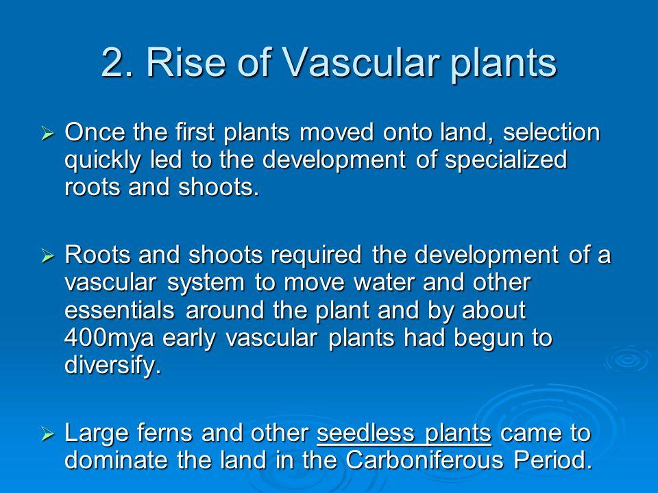 2. Rise of Vascular plants