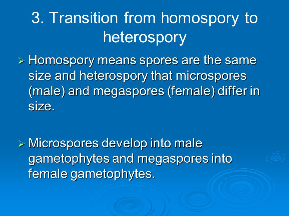 3. Transition from homospory to heterospory
