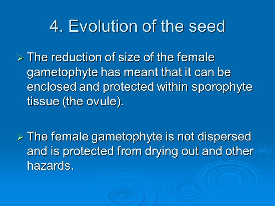4. Evolution of the seed