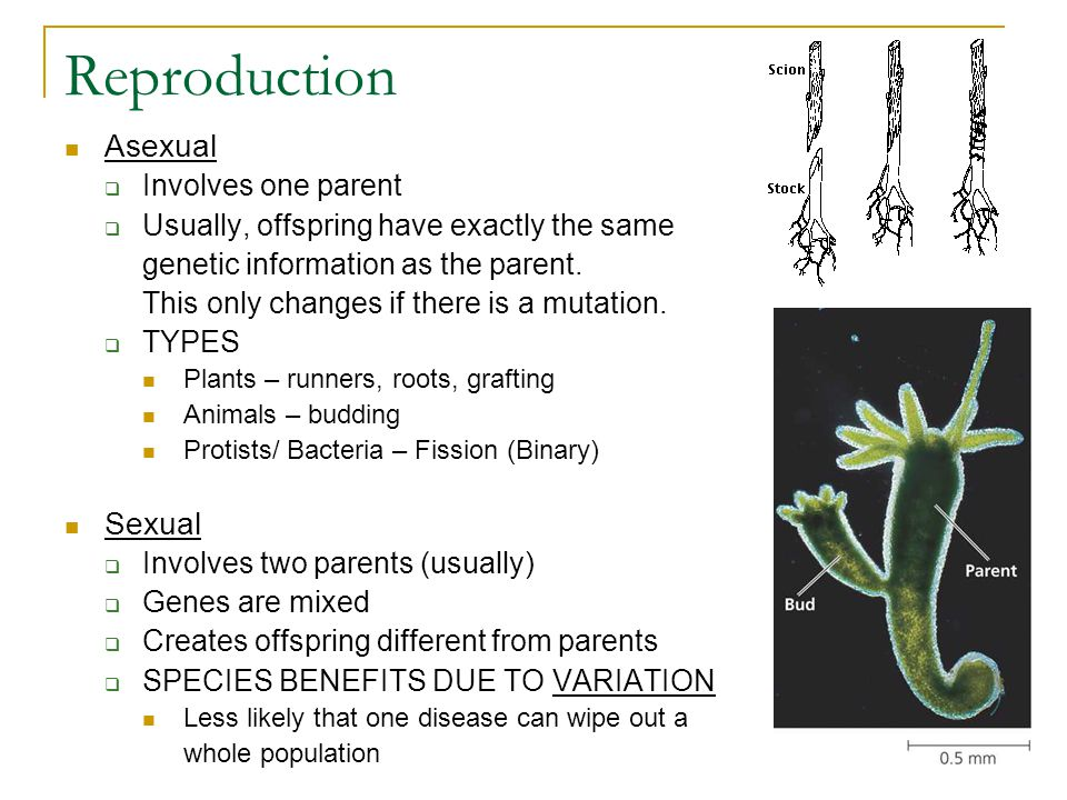 Reproduction Asexual Sexual Involves one parent