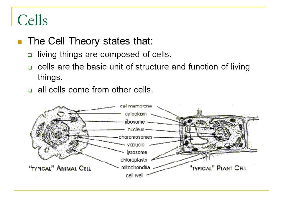 Cells The Cell Theory states that: