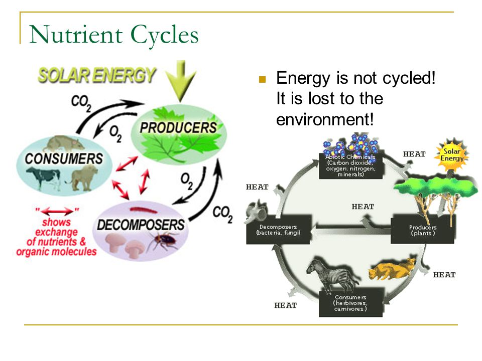 Nutrient Cycles Energy is not cycled! It is lost to the environment!