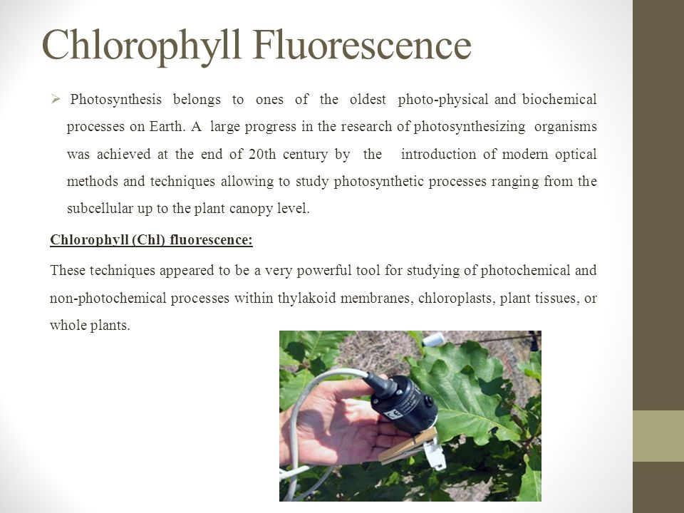 Chlorophyll Fluorescence