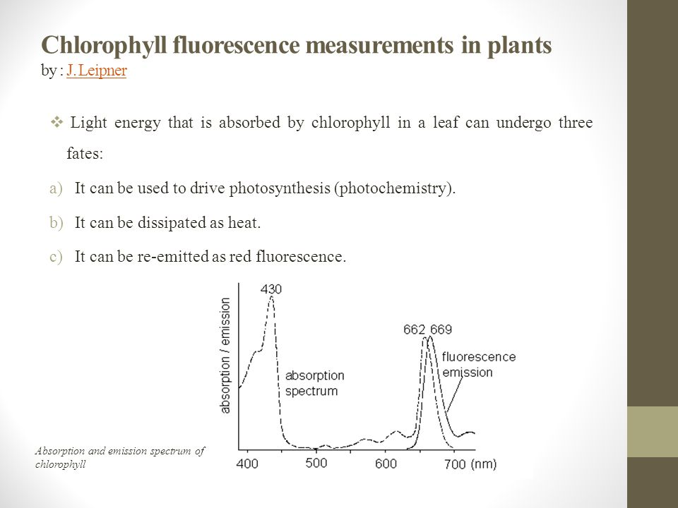 Chlorophyll fluorescence measurements in plants by : J. Leipner