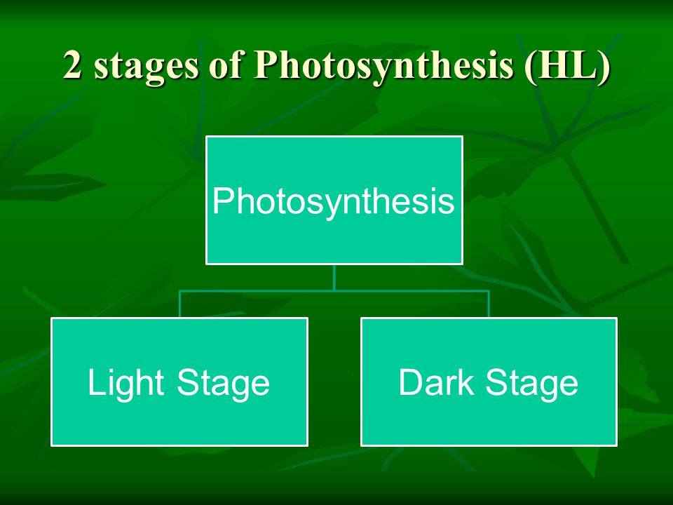 2 stages of Photosynthesis (HL)