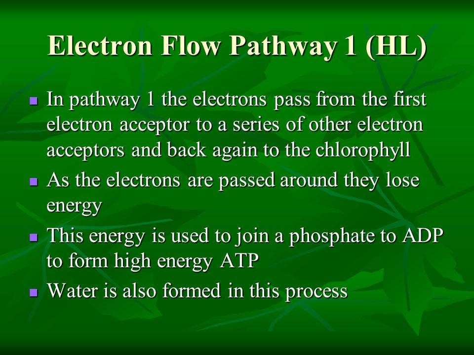 Electron Flow Pathway 1 (HL)