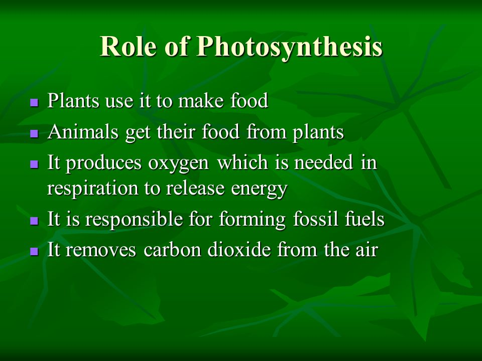 Role of Photosynthesis