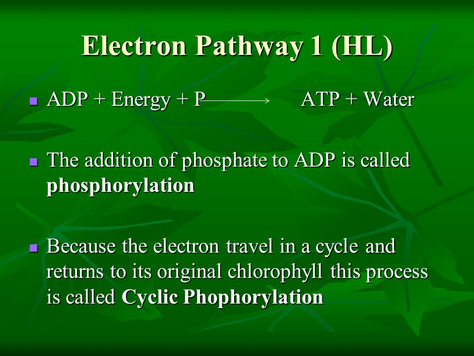 Electron Pathway 1 (HL) ADP + Energy + P ATP + Water