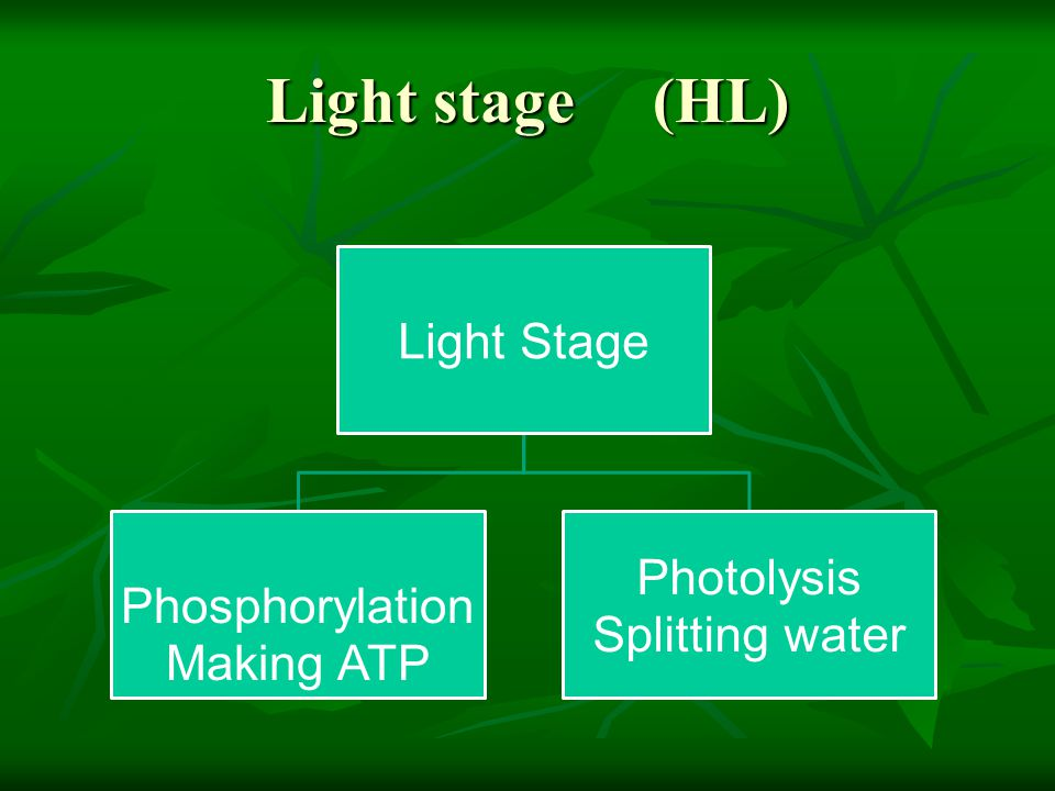 Light stage (HL) Light Stage Phosphorylation Photolysis