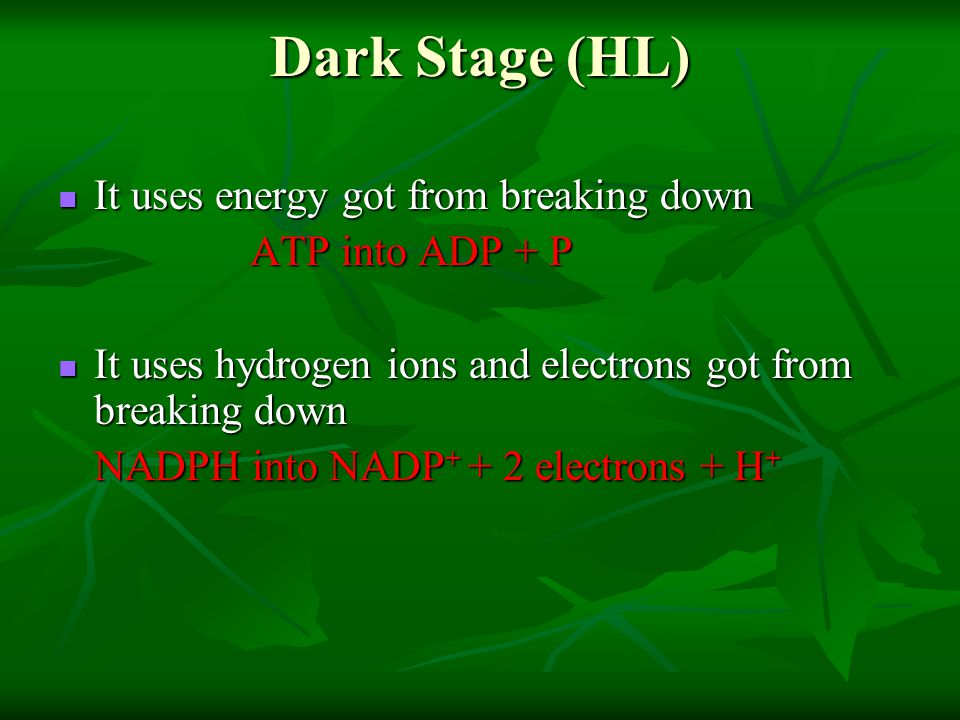 Dark Stage (HL) It uses energy got from breaking down ATP into ADP + P