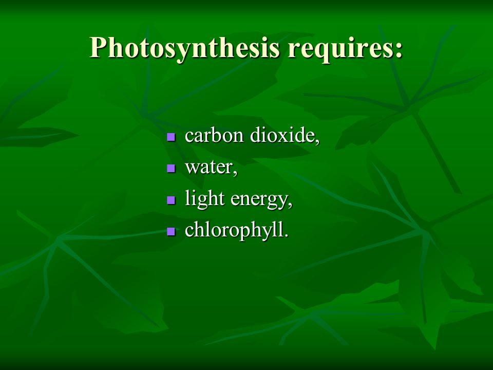 Photosynthesis requires: