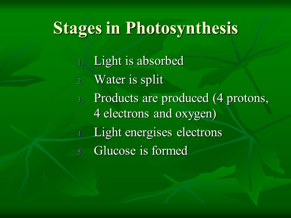 Stages in Photosynthesis