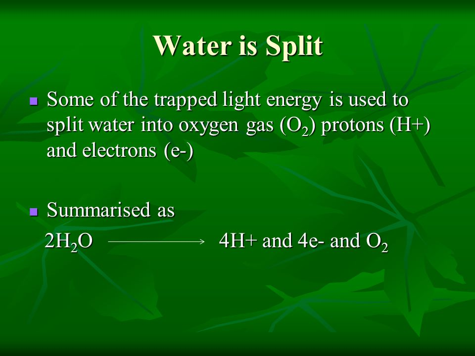 Water is Split Some of the trapped light energy is used to split water into oxygen gas (O2) protons (H+) and electrons (e-)
