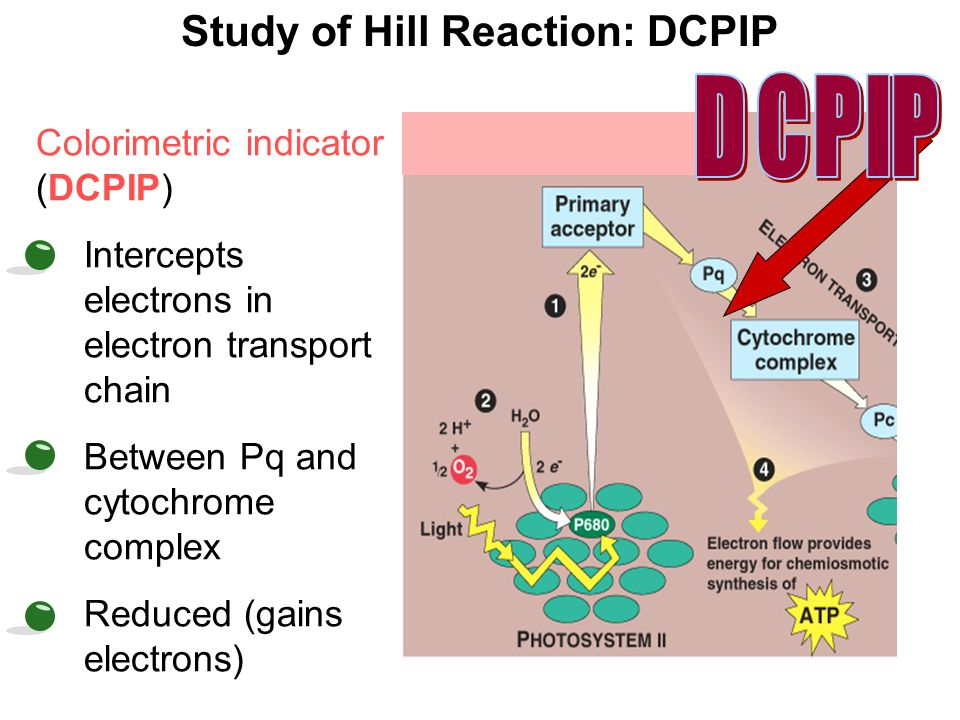 hill reaction This video covers a simple method for measuring the photosynthetic dehydrogenase activity in chloroplasts extracted from leaf cells, known as the hill reaction.