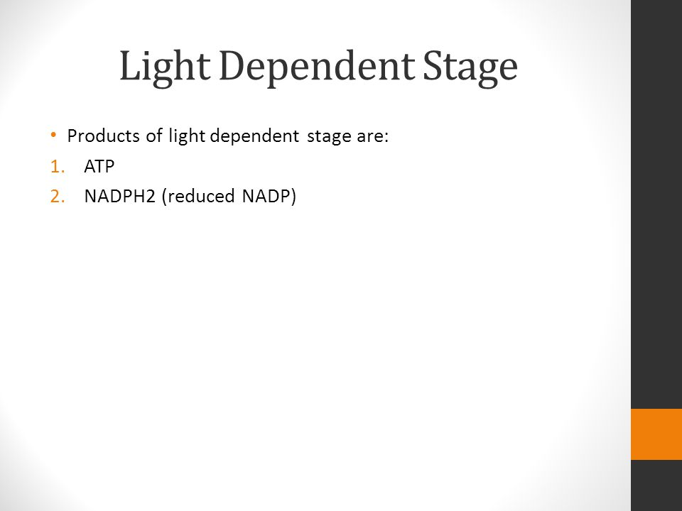 Light Dependent Stage Products of light dependent stage are: ATP