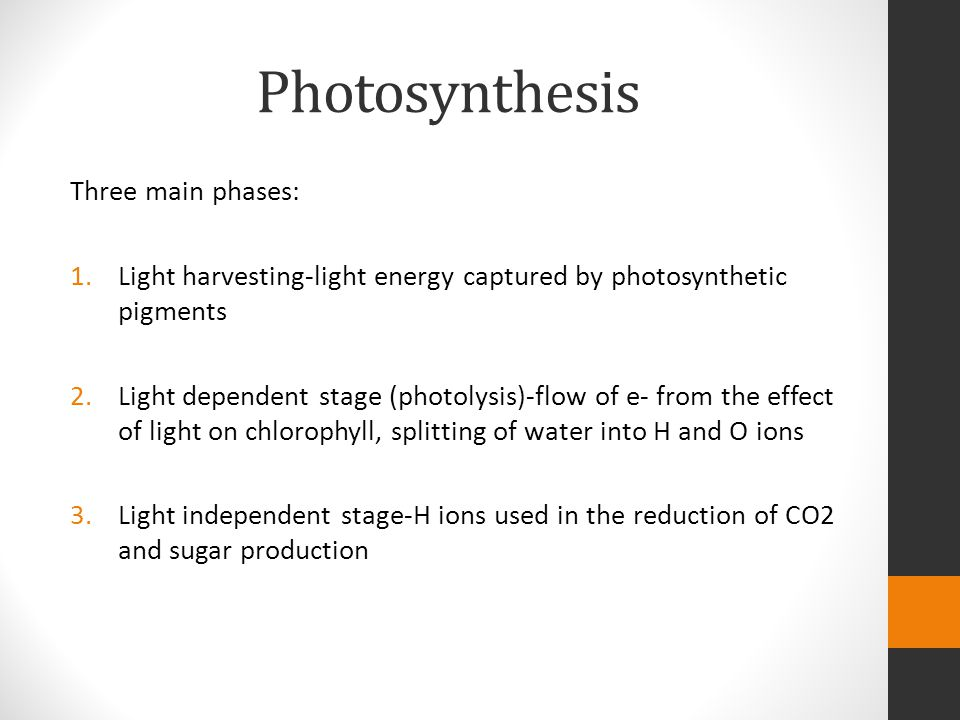 Photosynthesis Three main phases: