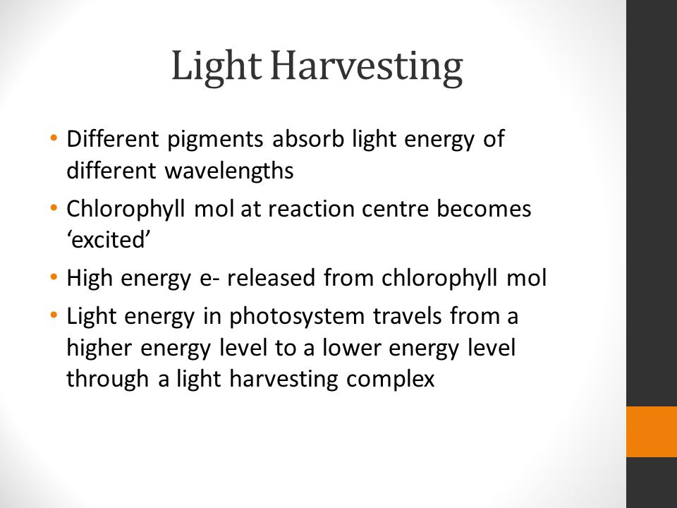Light Harvesting Different pigments absorb light energy of different wavelengths. Chlorophyll mol at reaction centre becomes 'excited'