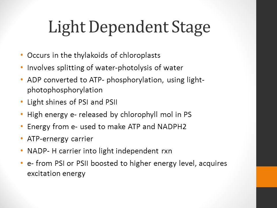 Light Dependent Stage Occurs in the thylakoids of chloroplasts