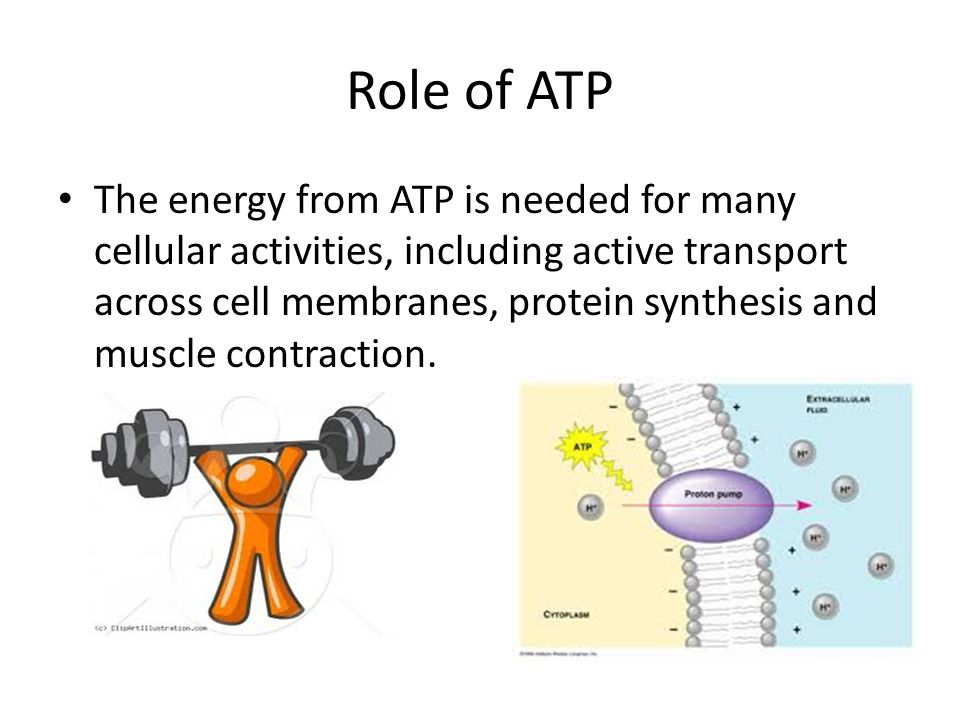 Role of ATP