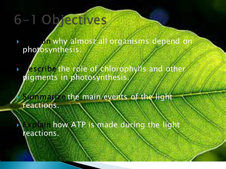 6-1 Objectives Explain why almost all organisms depend on photosynthesis. Describe the role of chlorophylls and other pigments in photosynthesis.