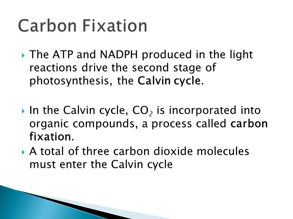 Carbon Fixation The ATP and NADPH produced in the light reactions drive the second stage of photosynthesis, the Calvin cycle.