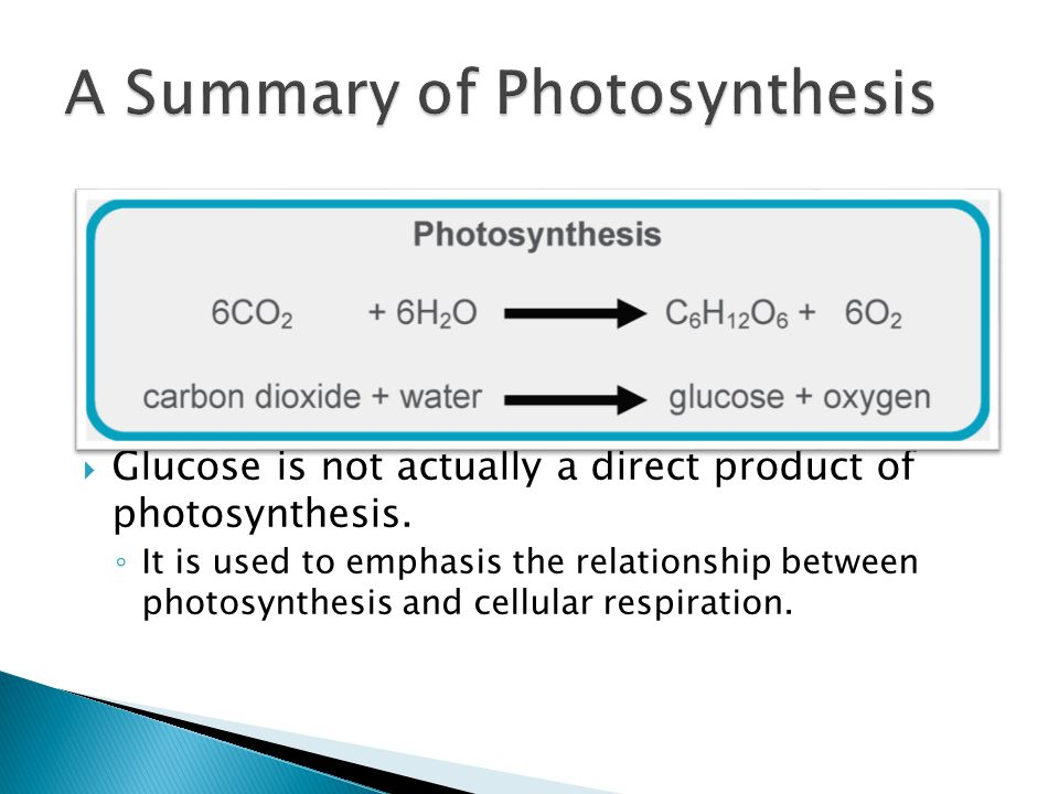 A Summary of Photosynthesis