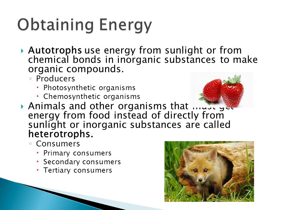 Obtaining Energy Autotrophs use energy from sunlight or from chemical bonds in inorganic substances to make organic compounds.