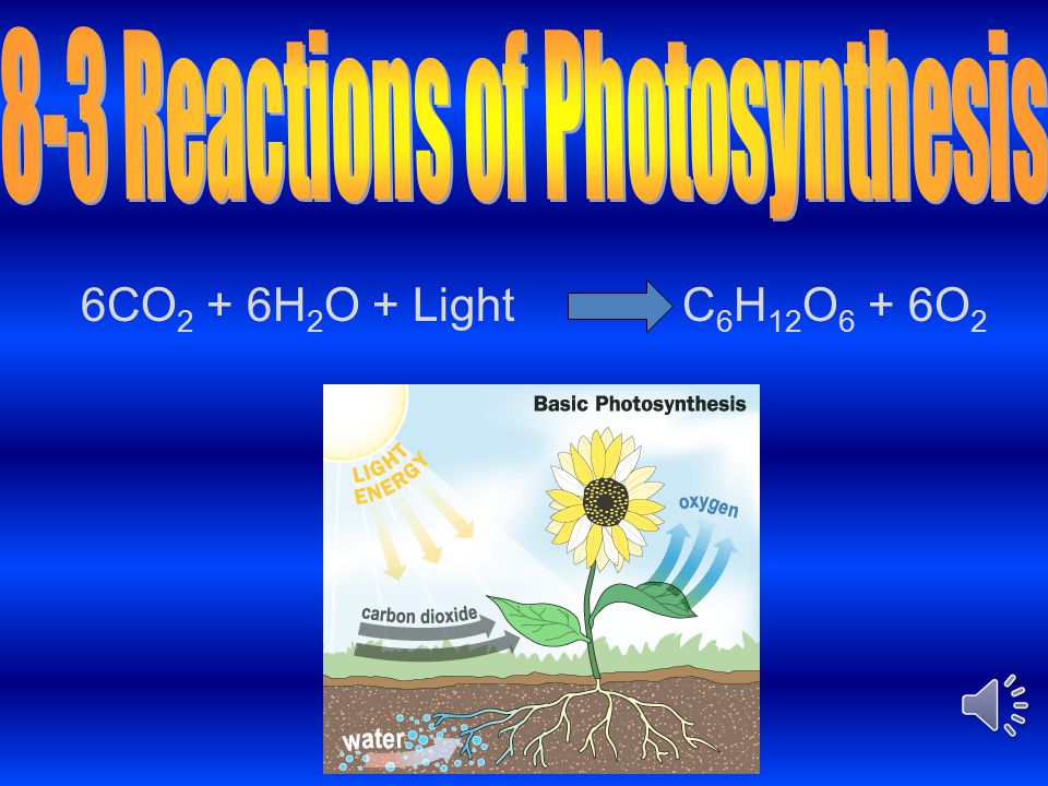 8-3 Reactions of Photosynthesis