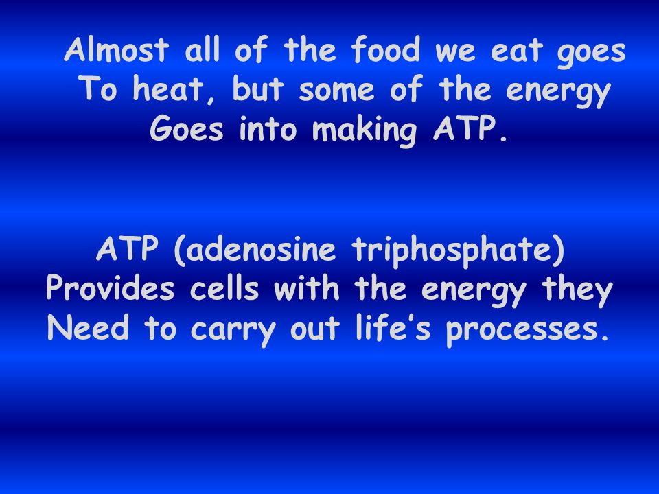Almost all of the food we eat goes To heat, but some of the energy