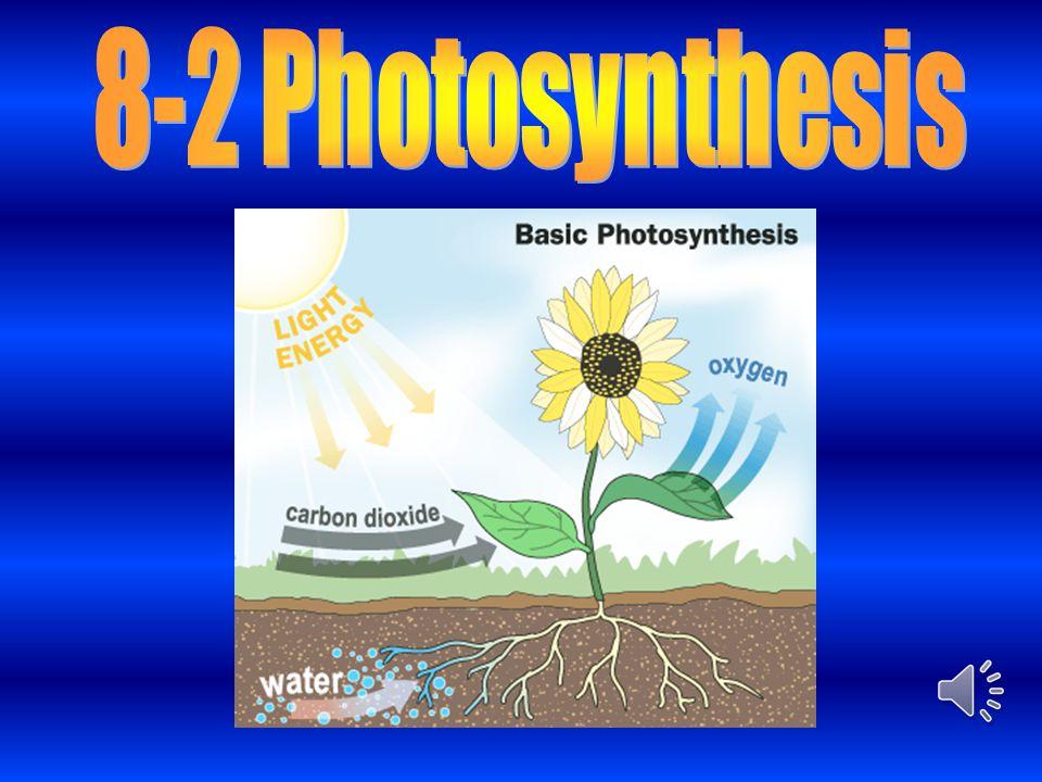8-2 Photosynthesis
