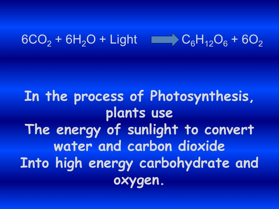 In the process of Photosynthesis, plants use