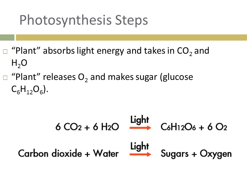 Photosynthesis Steps Plant absorbs light energy and takes in CO2 and H2O.