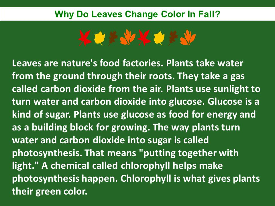 Why Do Leaves Change Color In Fall